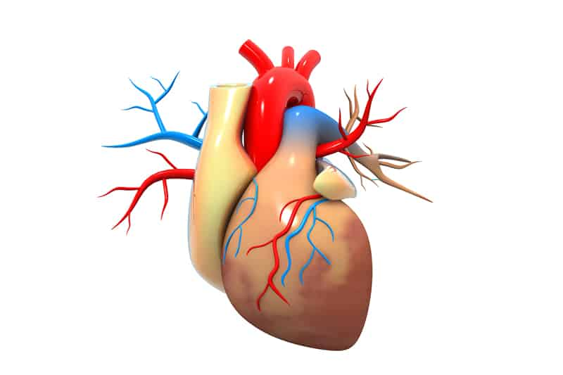 How is heart failure diagnosed?