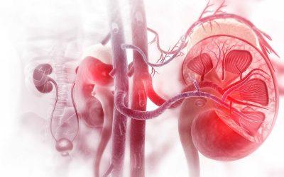 નેફ્રોલોજી એટલે કીડની ને લગતા રોગોનું વિજ્ઞાન