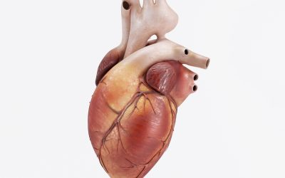 હૃદયની સામાન્ય માહિતી